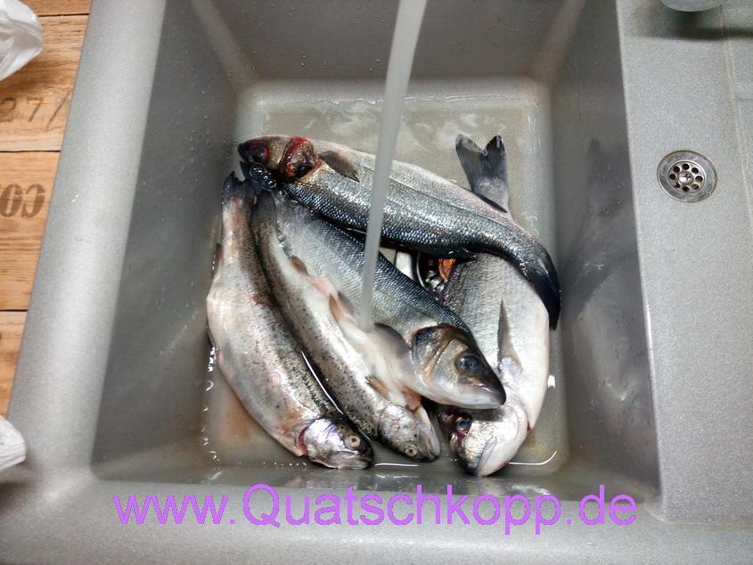 Quatschkopp Karfreitag Fisch Grill Wolfsbarsch Dorade Forelle 2015 1